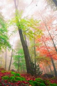 Fog by Mirko Fikentscher