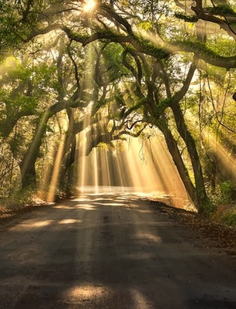 Breaking Through - Botany Bay Road, Edisto Island, South Carolina by Michael  Woloszynowicz